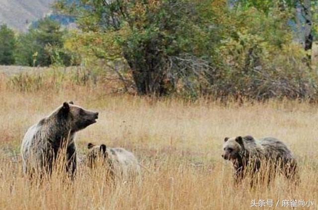 5個因人類獵食而滅絕的物種,第3種有希望重新復活 - 每日頭條