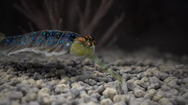 歐巴!5眼老妖怪:歐巴賓海蠍 - 每日頭條
