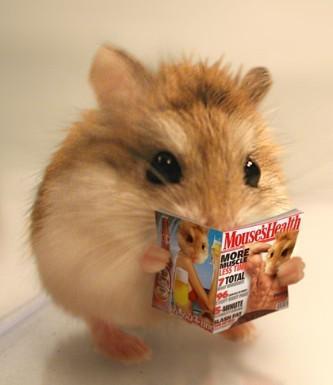 居家觀賞性小寵——老公公倉鼠 - 每日頭條