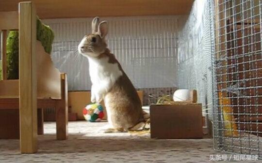 為什麼我們選擇飼養兔子? - 每日頭條