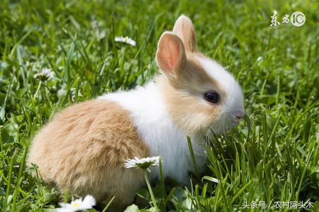如何挑選健康好養的兔子呢! - 每日頭條