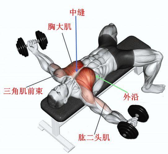 想要孤立刺激胸肌,你的「動作方向」(也就是開合的動作)平行地板,啞鈴飛鳥,握住一對啞鈴,練厚胸肌指日可待 - 每日頭條