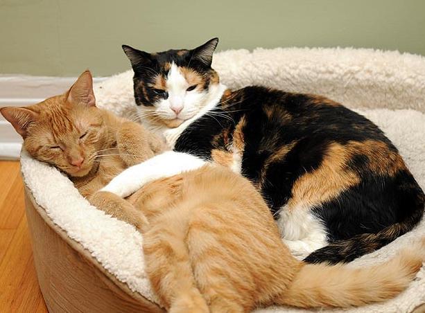你能想像貓的突然死亡嗎?貓突然死亡的原因都有哪些 - 每日頭條
