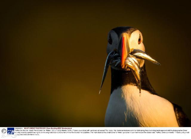 英國威爾斯斯科莫島,自由自在的生物 - 每日頭條