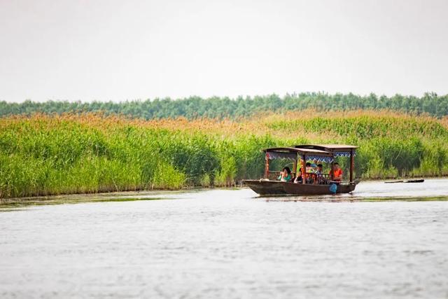 賞東平湖濕地原生態之美 看古老技藝鸕鶿捕魚表演 - 每日頭條