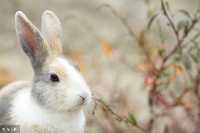 寶寶很喜歡小兔子,家裡養兔子好不好,該怎麼養寵物兔子? - 每日頭條