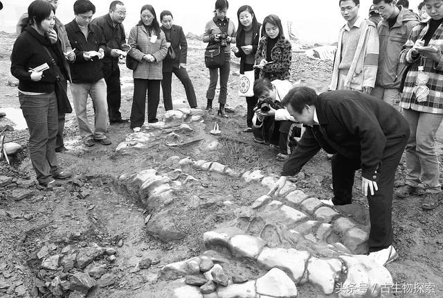 中國百年十大恐龍---馬門溪龍 - 每日頭條