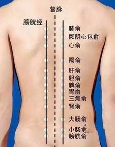 中醫經穴之——「背俞穴」 - 每日頭條