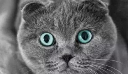 折耳貓喜歡站立的原因背後讓人心酸 - 每日頭條