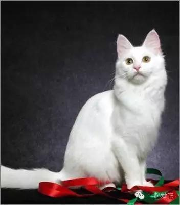 貓咪品種分類,喜歡哪只就抱走哪只吧 - 每日頭條