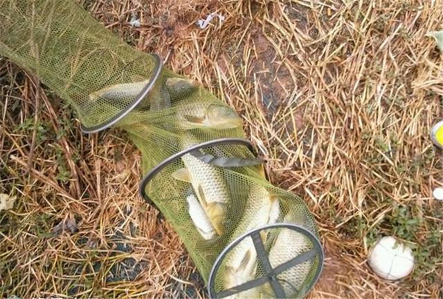 自製泡避免雜魚的玉米粒釣餌窩料配方,野塘狂拉大鯉魚 - 每日頭條