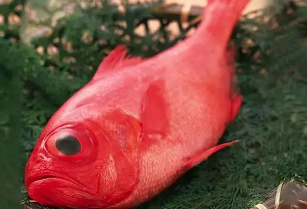 這真的不是大眼雞魚 這是金目鯛啊! - 每日頭條