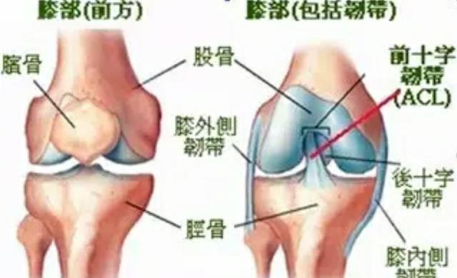 膝關節韌帶受傷該怎麼辦?如何檢查膝關節韌帶受損? - 每日頭條