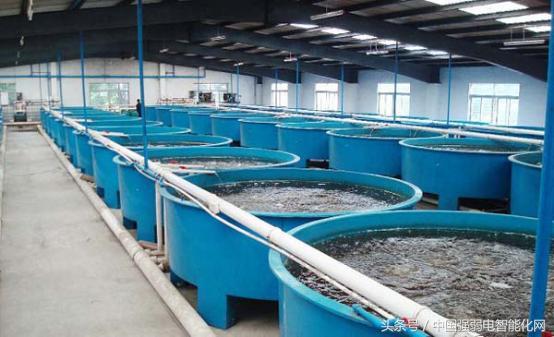 你為水產養殖煩腦嗎?魚塘養殖水質在線監測系統為你解決! - 每日頭條