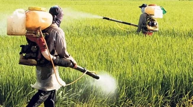 Pestisit nedir? - Son Dakika Haberleri Milliyet