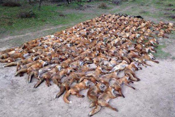 """The picture was posted with the caption: """"A real night lamping foxes. Anyone beat this???"""" (Image: Vinnie Jones /Twitter)"""