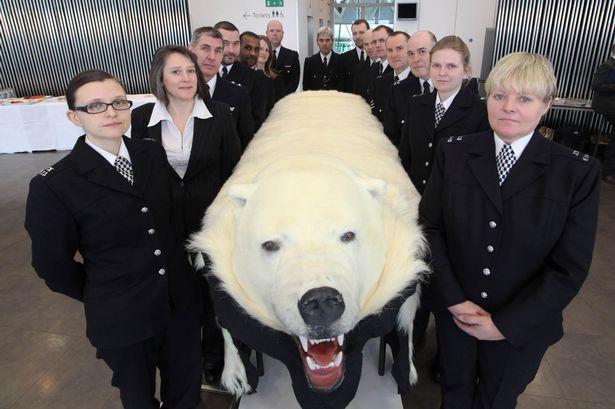 Seized: Polar bear skin