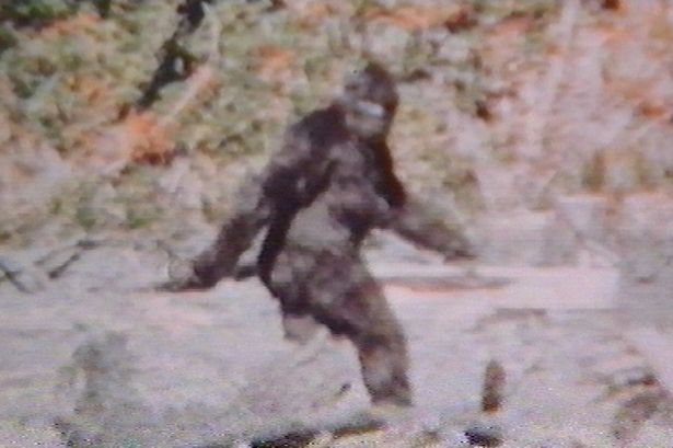Mystery: Claimed Bigfoot sighting from 1967