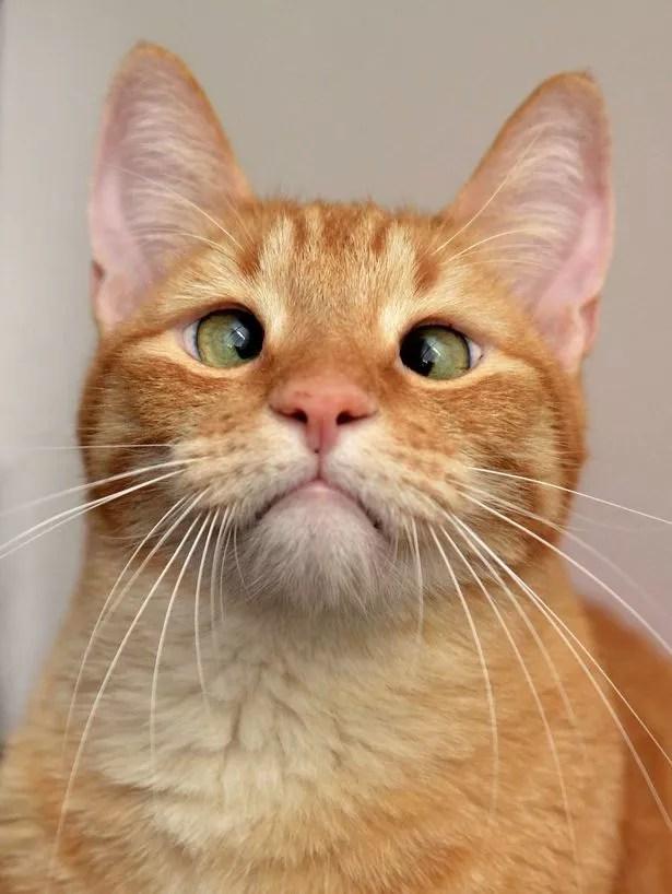 Croce eyed cat