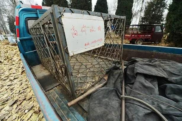 Jaulas: Los perros callejeros son mantenidos en cautiverio para los comensales para elegir cuál de ellos les gustaría comer