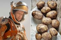Image result for matt damon plant potatoes
