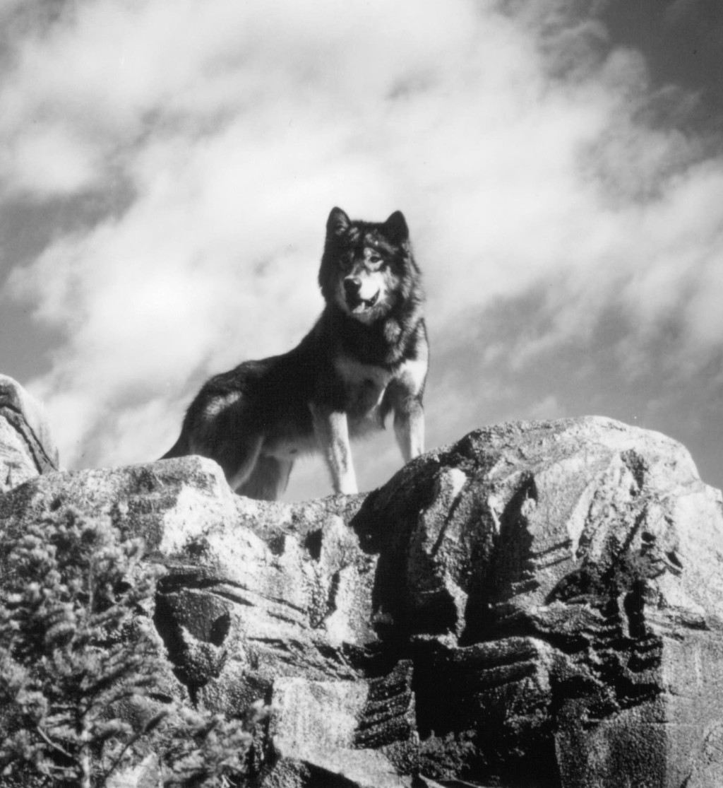 Watch White Fang 2 Myth Of The White Wolf On Netflix