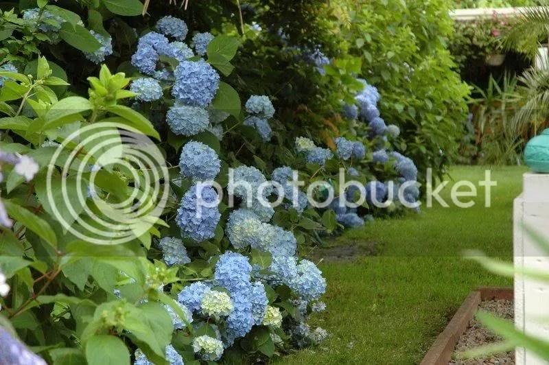 blauwewereld-5.jpg