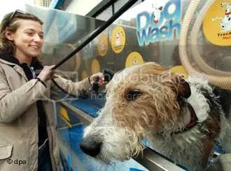 dog wash Pictures, Images and Photos