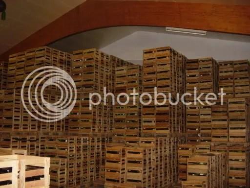Wine cellar in Maikammer