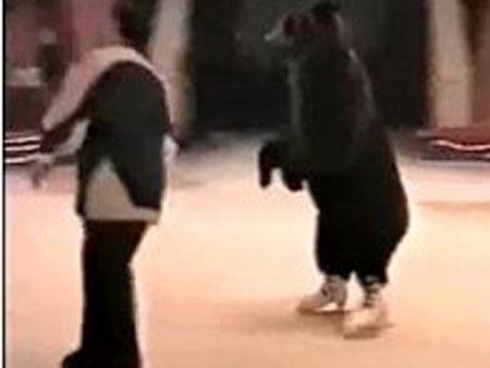 urso patinador