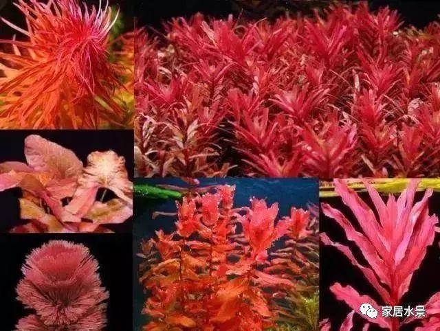 家居水景丨水草的種植方法和配置教你渡過新手期 - 壹讀