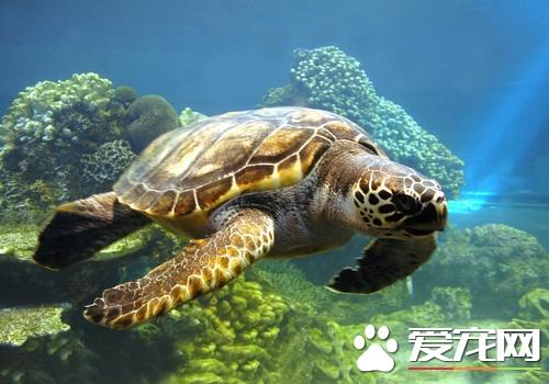 烏龜為什麼不吃飼料 可能與這些因素有關 - 壹讀
