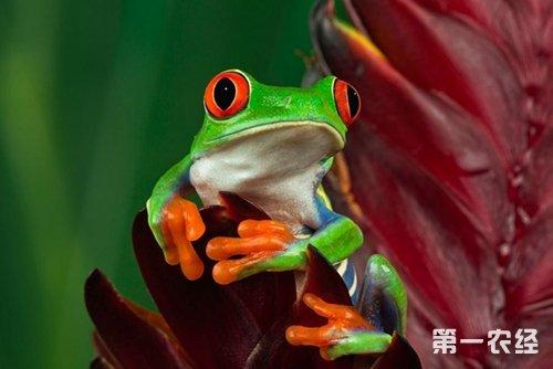 爺爺飼養樹蛙有一套 樹蛙飼養技巧總結 - 壹讀