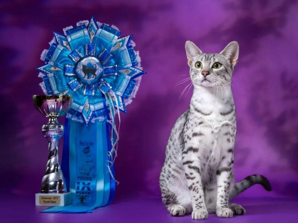 月神的化身——埃及貓 - 壹讀