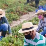 Redditi agricoli giù nonostante la crescita dei consumi alimentari
