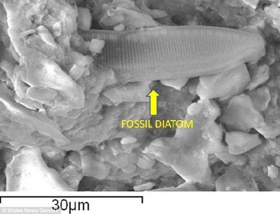 一幅掃描電子顯微照片,展示了微化石