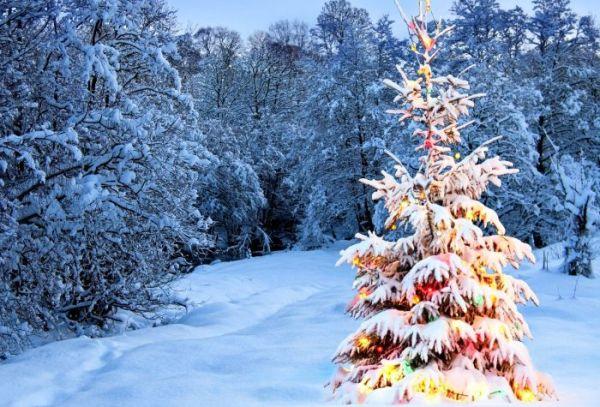 Картинка украшенная гирляндами новогодняя елка в зимнем лесу