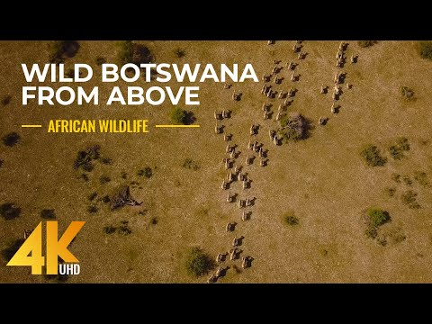 Wild Botswana in 4K - Incredible Drone Footage of African Wildlife + Music