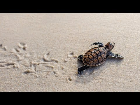 Understanding Survival - Part 1 - The Metaphysics Of Being Human