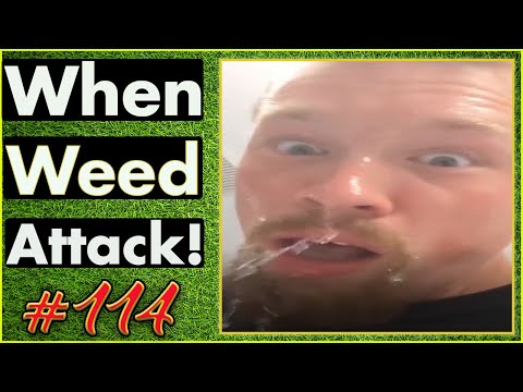 Smoking Weed / Weed Fail Compilation / WEED MEMES AND Weed Pranks! #114