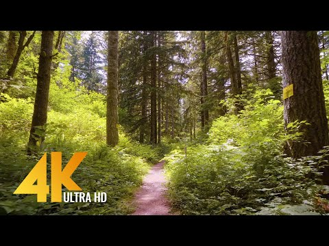 Peaceful Forest Walk through Iron Horse State Park - 4K Nature Walk with Piano Misic