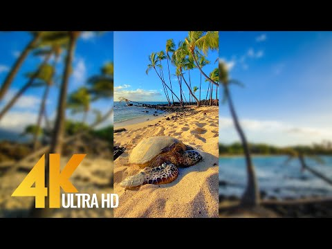 Vertical 4K Nature Film with Music - The Beauty of Big Island's Nature, Hawaii