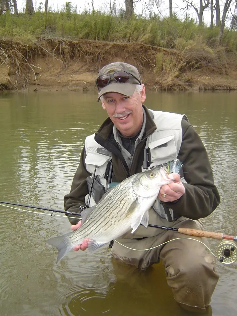 Spring White Bass Iii Fly Tackle And Tactics The Ozark