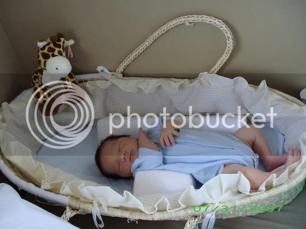 Jude in a basket