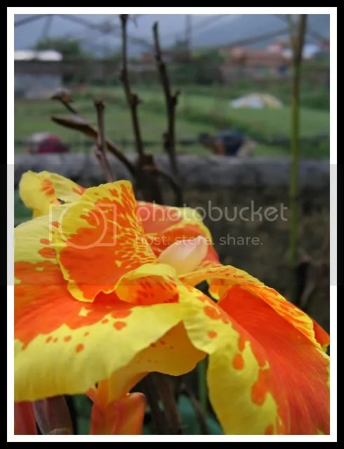 Nepal, Pokhara, Flower