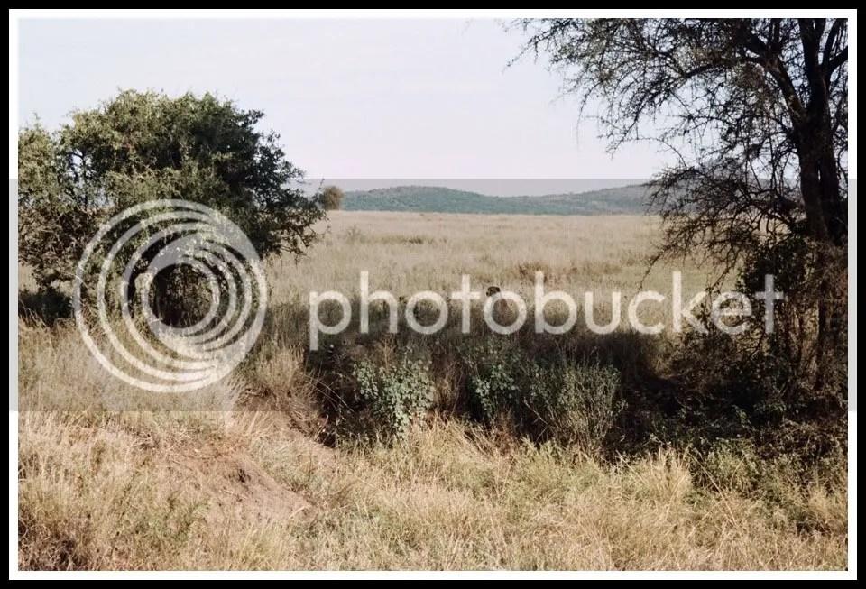 Tanzania, Serengeti National Park
