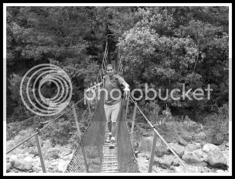 New Zealand - Coromandel Forest, Royi Avital
