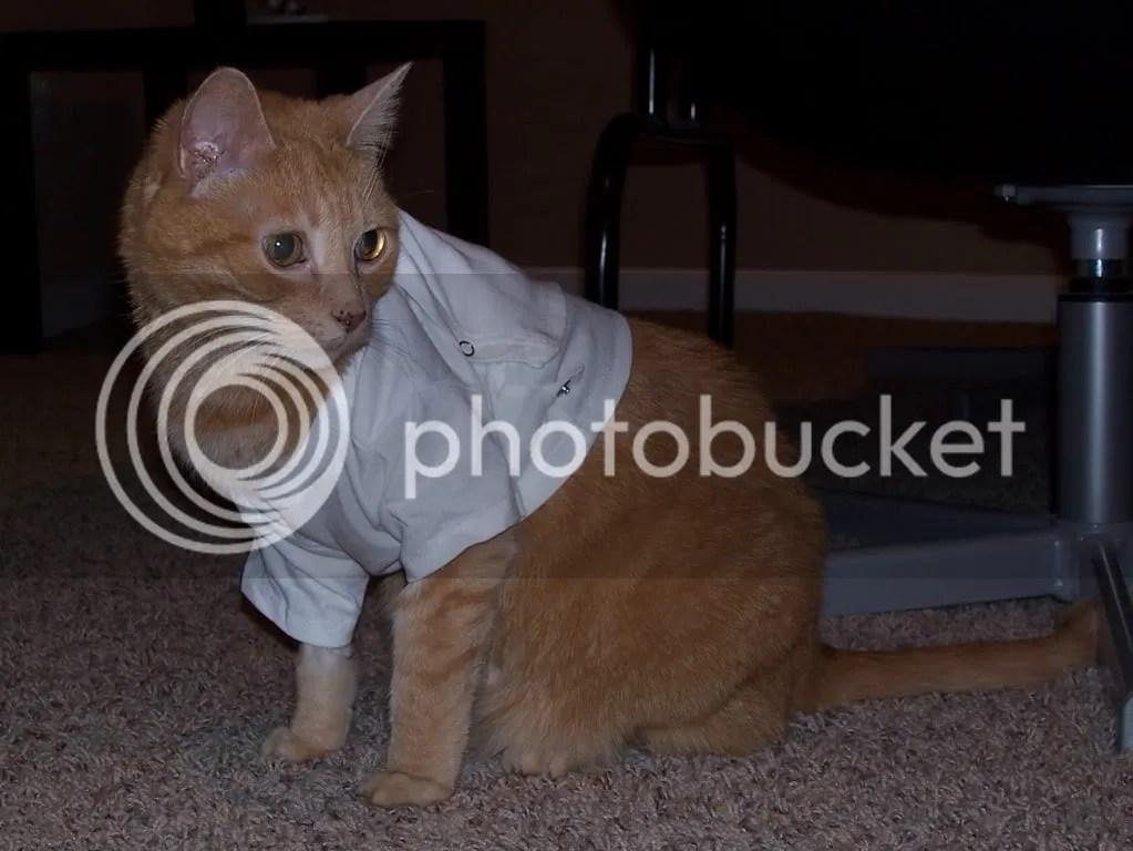 chico baby shirt 2