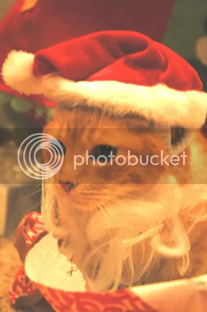 Merry Christmas, Chicken 2010