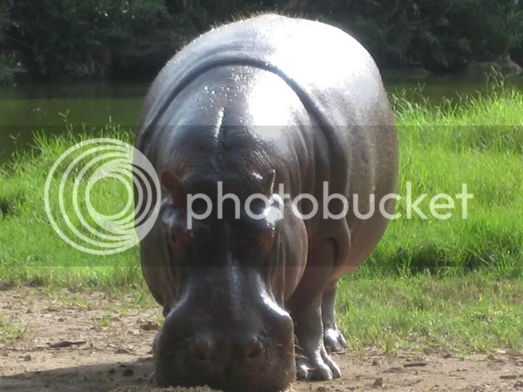 Owen Amp Mzee Bizarre Animal Friends